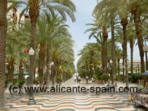alicanet harbor palms