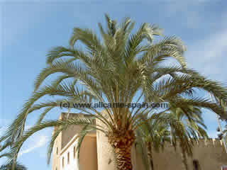 Elche world capital of palm trees