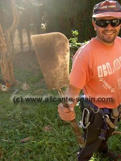 cutting palm trees