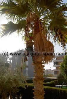 palm trees rough